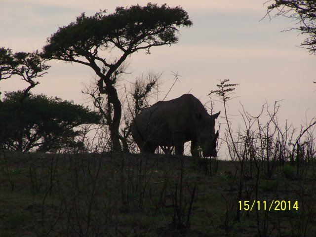 EuroZulu Guided Tours & Safaris Hluhluwe / Umfolozi : Sat 15 & Sun 16 November 2014