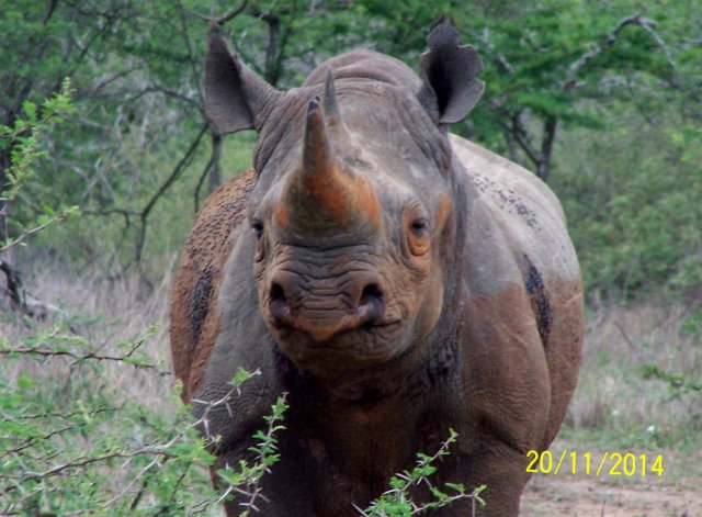 EuroZulu Guided Tours & Safaris Hluhluwe / Umfolozi : Friday 21 November 2014