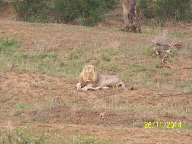 EuroZulu Guided Tours & Safaris Hluhluwe / Umfolozi : Thursday 27 November 2014